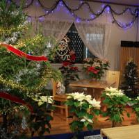 京都府立植物園の第25回ポインセチア展に行ってきました(2016年12月3日)