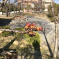 🌸~桜情報~🌸
