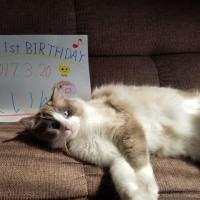 レイン君1歳お誕生日おめでとう♪