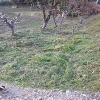 カウスリップ & 柿畑草刈り~