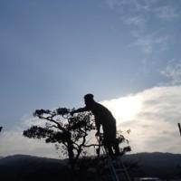 枝を切る人