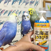 北海道限定土産