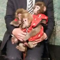 お猿のいる居酒屋!