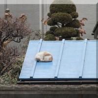 この寒さの中 野良猫ちゃんが・・・