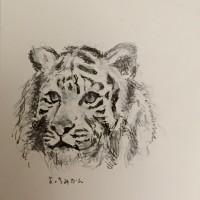 ホワイトタイガーを描いてみました^_^