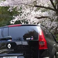 桜の 「待ち」に舞い降りて カマクラという響きもロシア語みたい?