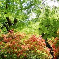 新緑の季節が到来。