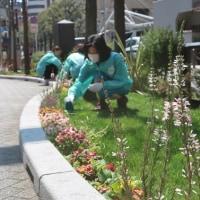 ●3/28 環境の緑化と美化報告 えんちゃんお腹植え替え
