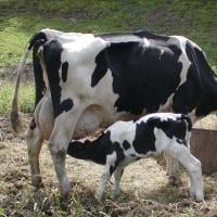 『牛乳拒否』 注射もしない薬も出さないその小児科には毎日全国から大勢のお母さん達でいっぱいだそうです
