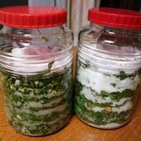 野草の酵素ジュースを仕込み・・・