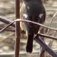 栖吉川ウォーキングで春近し(2)~3月に出合った野鳥たち