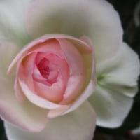 『ショートショートの花束9』