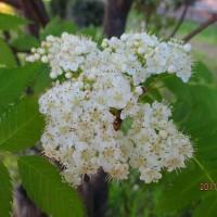 日記(4.30)散歩道の花