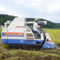 稲刈り&籾すり。 『新米・ハナエチゼン』
