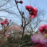 お墓参りで観てきたお花