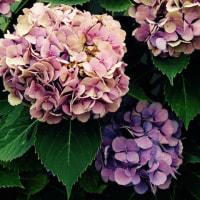 7/7 ヤーボイ治療 第1回目