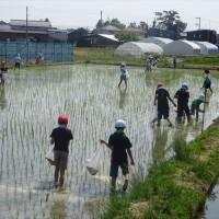 No.1.242 「田んぼと米ぬか」のお話。