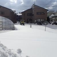 17年01月26日 ビニールハウス周囲除雪