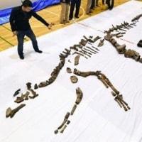 ハドロサウルス化石