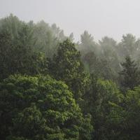 ホトトギスが鳴く森