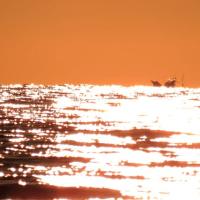雲海の朝と水平線の夕景