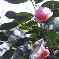シェフの屋台&早春のハーモニー 4 (服部緑地・都市緑化植物園)