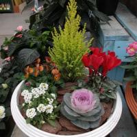 花屋さんの花々