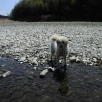 川遊び初体験