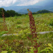 白馬五竜高山植物園(6)