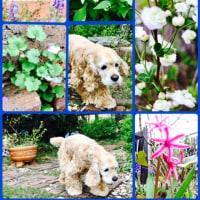 お庭ももうすぐ花ざかり٩(^‿^)۶