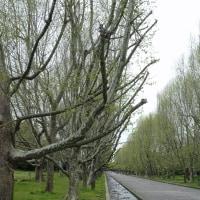 万博公園 (6)