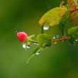 梅雨明けに名残りの雨が
