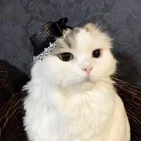 カンタン!カンカン帽♡