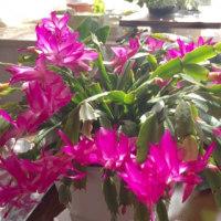 テーブルの花たち