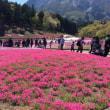 季節をつくるピンクの花