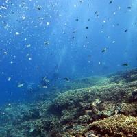 透明度最高!沖縄ダイビング 那覇シーマリン