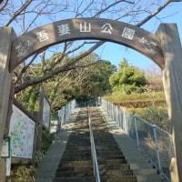 早春を華麗に彩る「菜の花」& 富士山