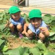 みどり 4歳児 常盤農園