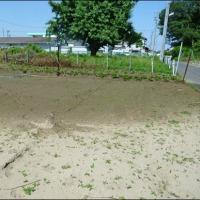 6月の畑 (雨が少ない!)