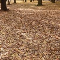 992 「代々木公園の彩りの妙」