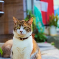 赤襟の清ちゃんと、三毛猫のたま (5)