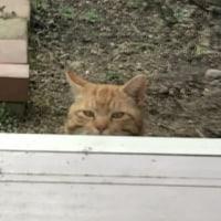 猫の「渦巻さん」がやってきた。