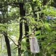 キリコの飾り付け準備は自前でという貼り紙と、木の枝にぶら下げられた板キリコ。大乗寺。