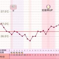 D34 高温期19日目