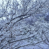 「雪飾りて」 いわき 背戸峨廊にて撮影!