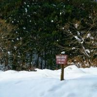 天然療養ラドン温泉。