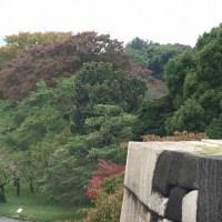皇居東御苑の紅葉情報