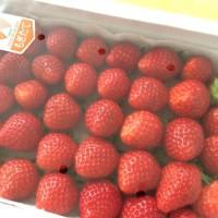 苺は野菜か果物か?  小学生の答えは?