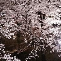 上田城跡の夜桜