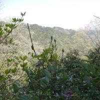 春の山歩き🌸足腰鍛錬(和泉の山を歩く)2017.4.19